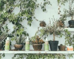 Review: Calia Natural