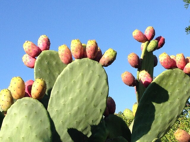 12 tips on how to avoid a hangover prickly pear